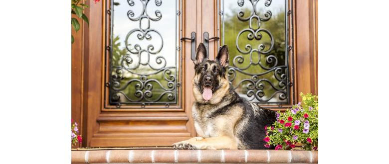 The Best Home Security System for Pet Owners