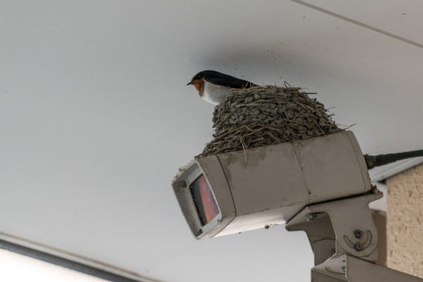 Picture of bird nest on outdoor security camera