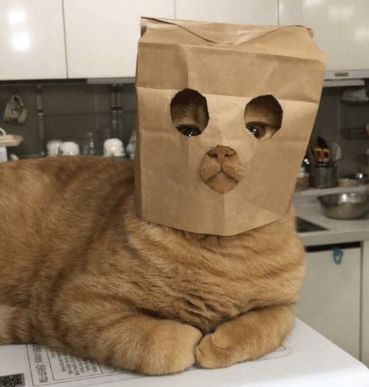 Picture of a cat wearing a paper bag mask