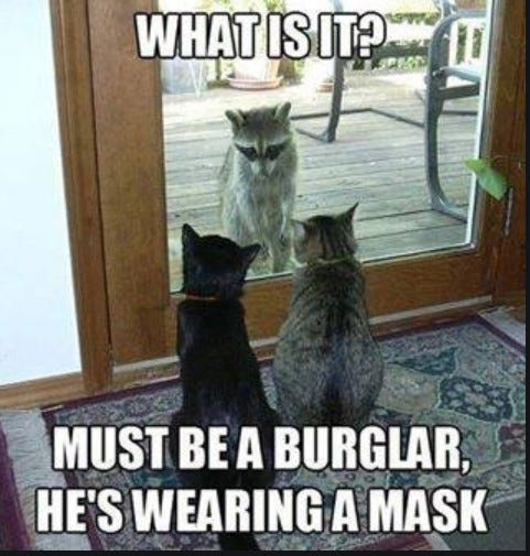Picture of cats looking through a window at a racoon