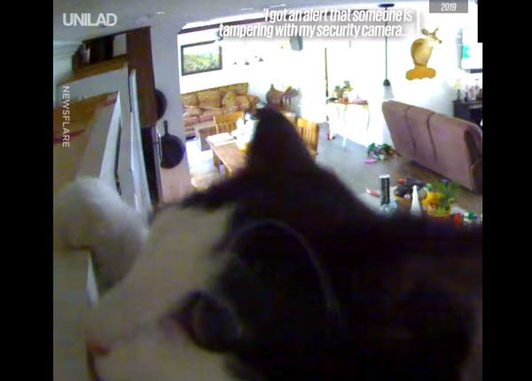 Video of a cat in front of a security camera